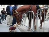 Бедные лошади